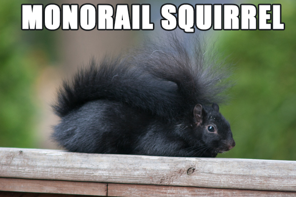 Monorail Squirrel
